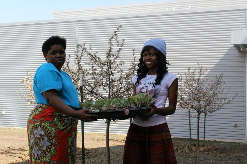 Chantal Gatimatare and her daughter Charlotte carry a tray of cabbage transplants, which they hope will, along with other vegetables, both feed their family and bring in some income.