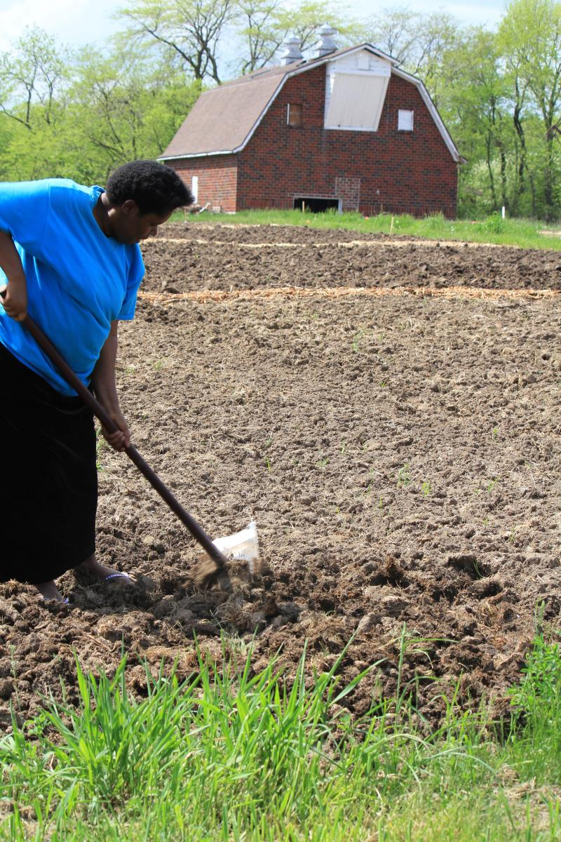 The historic barn in the background will soon have coolers to keep harvested produce fresh until market day. Chantal Gatimatare begins working her 50-foot by 50-foot plot.
