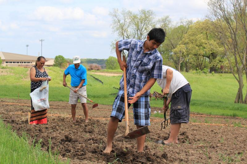 At Global Greens Farm in West Des Moines, Iowa, Bel Chhetri (in foreground) works the land with his grandparents and a friend. They emigrated from Nepal.