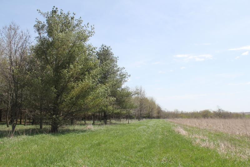 Trees help prevent soil erosion on adjacent farmland. John Berdo planted this stand with funds from USDA's Conservation Reserve Program.