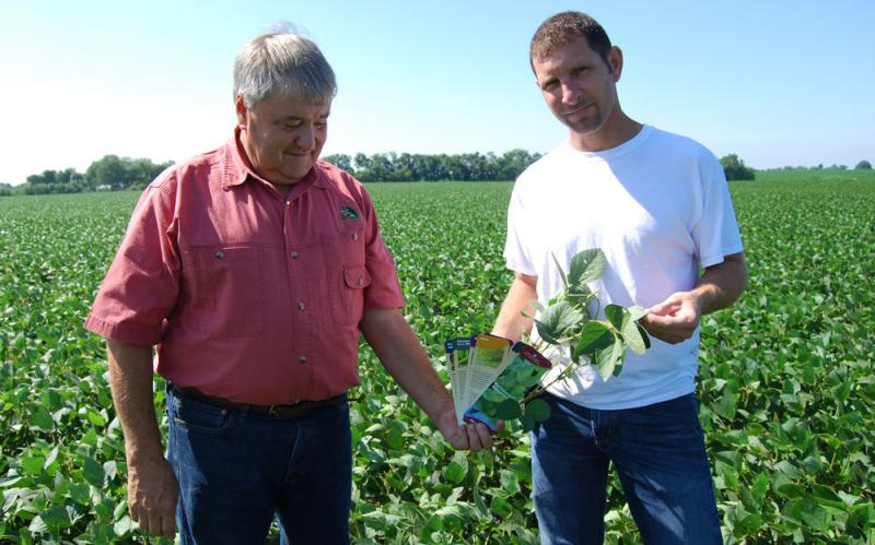 The soybeans in fields owned by Ron and Brian Flatt are looking healthy. But they still scout twice a week for signs of anything that could hurt their yields.