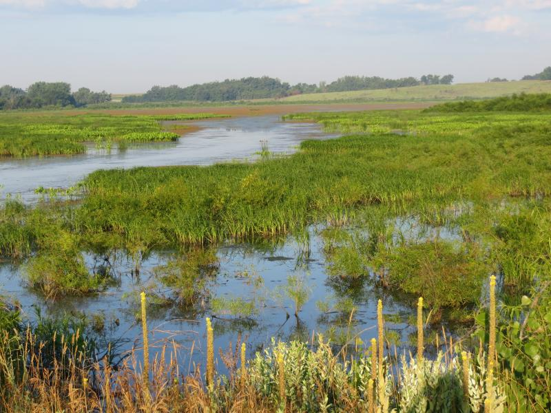 One of several wetlands in Hendrickson Marsh