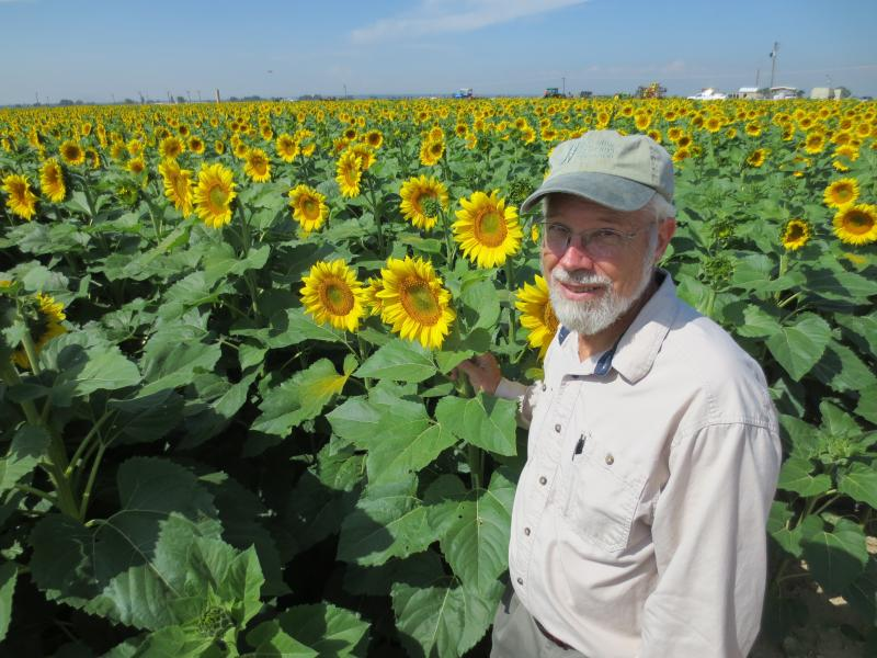 Tom Trout, a researcher at the U.S. Department of Agriculture who focuses on efficient and effective irrigation methods, checks sunflowers on a USDA research plot in Weld County, Colo.