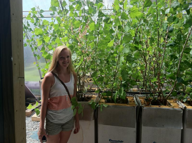 Student McKenna Cole stands with poplar trees used in her experiment to treat wastewater.