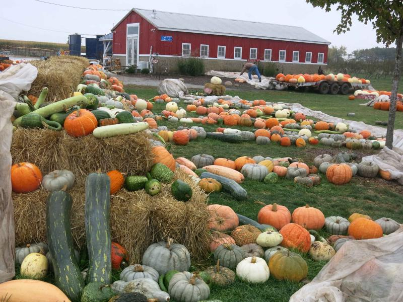 Ackerman Farms in Morton, Ill., boasts over 160 varieties of pumpkins and squash.