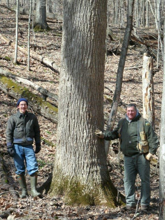 Mark Rouw (right) found the tree in 2010. Bruce Blair is DNR district forester.