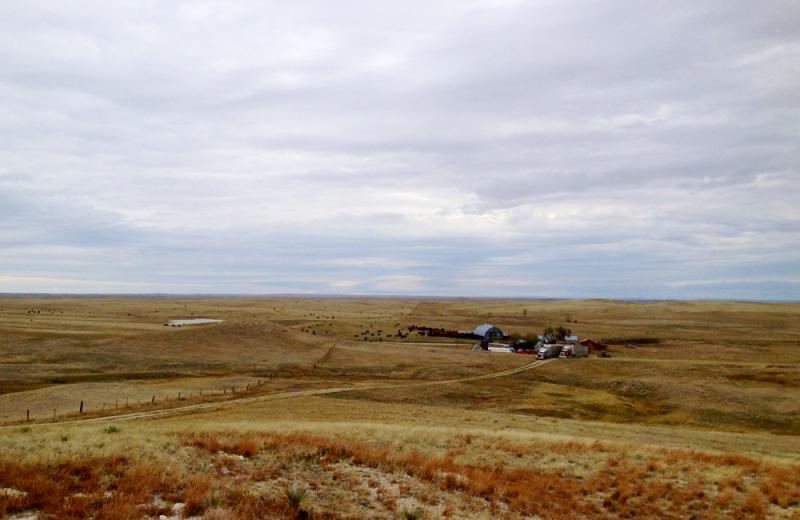 An early blizzard in October killed thousands of cattle in Nebraska, South Dakota and Wyoming. It came at a bad time because the government program that provides disaster relief is ineffective until Congress passes a new farm bill.