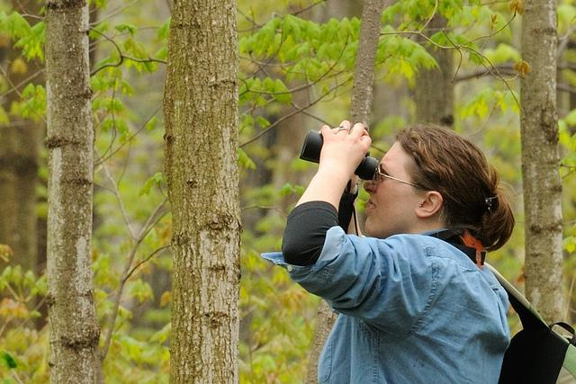 An environmental communications specialist looks for warblers at a phenology workshop in Illinois