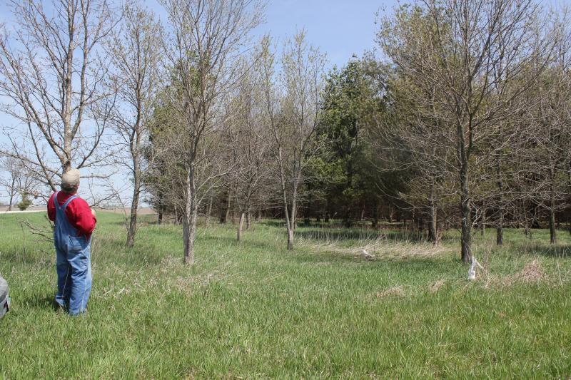 Conservation measures like this stand of trees on John Berdo's farm in southeast Iowa will now be more closely tied to crop insurance subsidies.