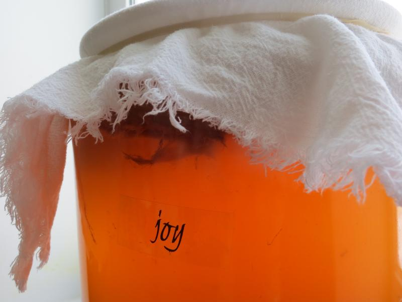 In the kitchen, light filters through a jar of fermenting kombucha.