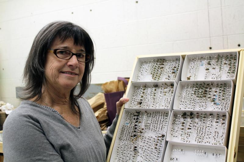 In her lab at Iowa State, Mary Harris keeps specimens of bees for her research on how they are impacted by environmental factors including corn dust.
