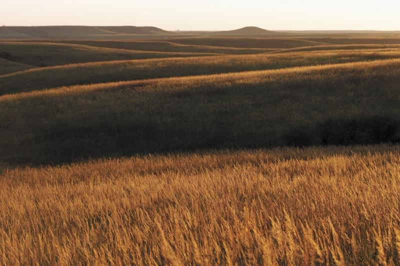 At one time 85% of Iowa was covered by tallgrass prairie.