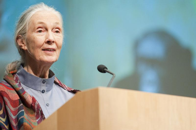 "Jane Goodall will be in Iowa on Monday, March 10 to present a lecture, ""Sowing the Seeds of Hope"""