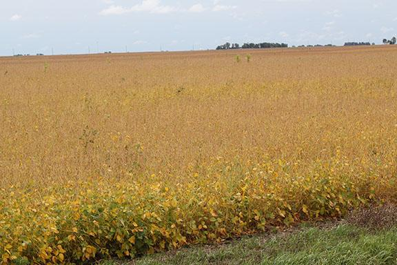 The USDA predicts farmers may plant more soybean acres this year, thanks in part to lower corn prices.