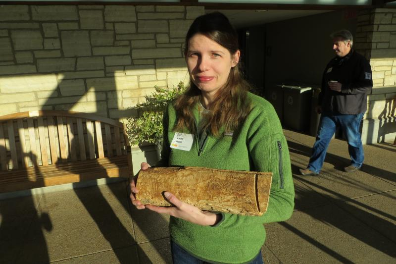 Entomologist Laura Jesse holds an ash log from a tree infested with the Asian beetle.