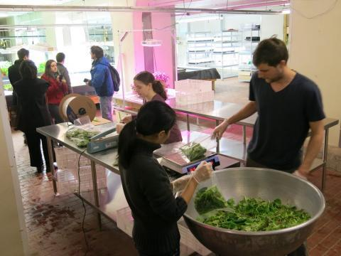 In the basement of The Plant Chicago, workers weigh and bag freshly-harvested greens.