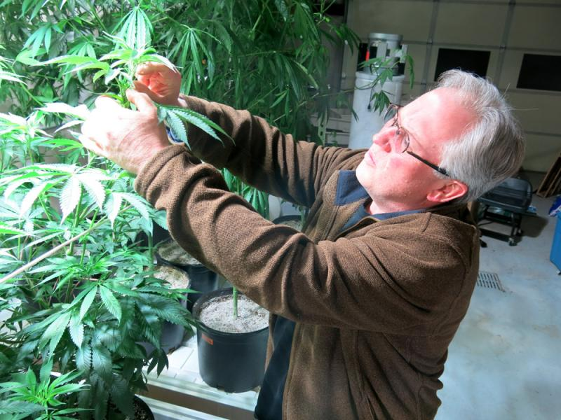 At Centennial Seeds in Lafayette, Colo., Ben Holmes is testing hemp varieties. Holmes made his name distributing and breeding strains of medical and recreational marijuana, but recently has become a prominent figure in Colorado's fledgling hemp industry.