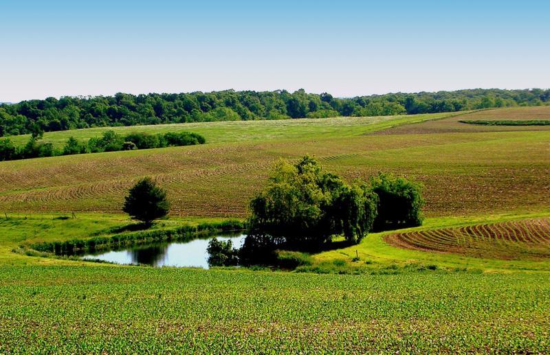 Iowa Farm Pond