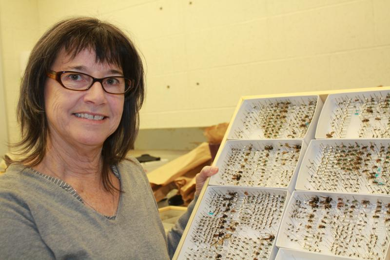 Iowa State University researcher Mary Harris works with farmers to place hives on their fields so she can study the pollen bees collect there during planting.