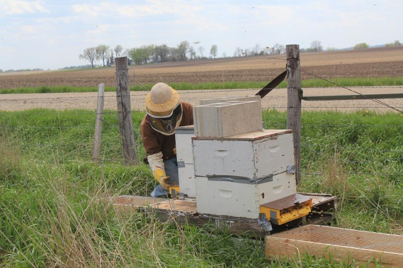 Cherokee, Iowa farmer Nathan Anderson wears beekeeping gear to protect himself when he opens or closes the pollen traps on the hives on his farm. He's allowed researchers to place three pairs of hives on his fields.