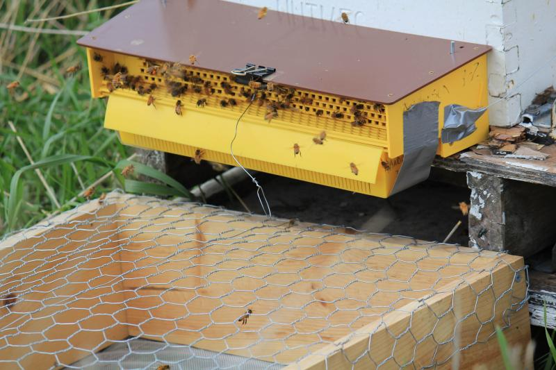 Bees at these hives near a corn field in Cherokee, Iowa must pass through a yellow plastic pollen trap, which brushes a bit of pollen into a drawer for researchers to study.