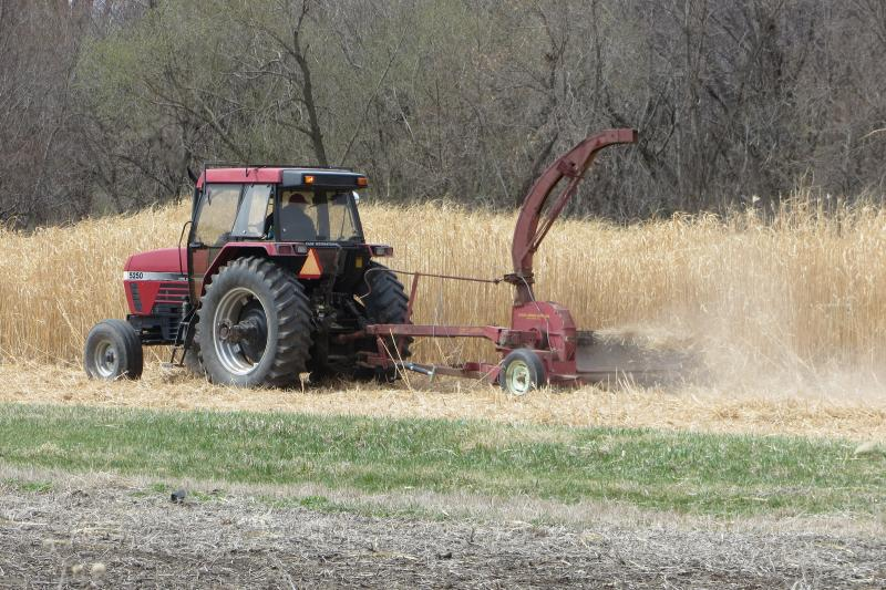 Miscanthus tolerates marginal land and Iowa winters, and has many environmental benefits.