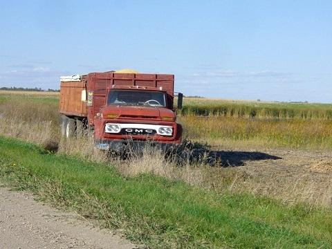 When Melanie Hoffert returned home to help with harvest, she decided to try driving a grain truck.