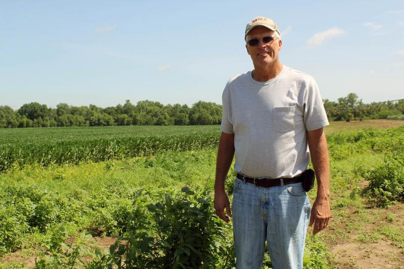 In Muscatine County, farmer Roger Hargrafen is doing all he can to eradicate the Palmer amaranth that emerged on his farm last year.