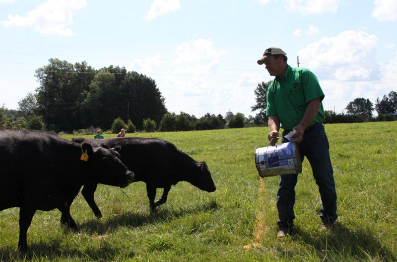 Farmer Jeff Jones and his daughters feed grain to their foraging cattle once a day in Callaway County, Mo. They're concerned about the health and environmental effects a potential hog farm next door might have.