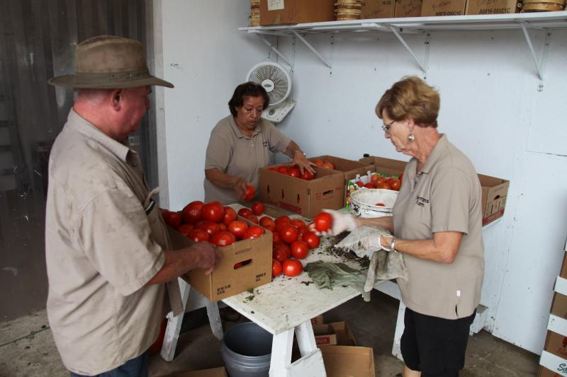 Tom Goeke looks on as workers process and pack tomatoes.
