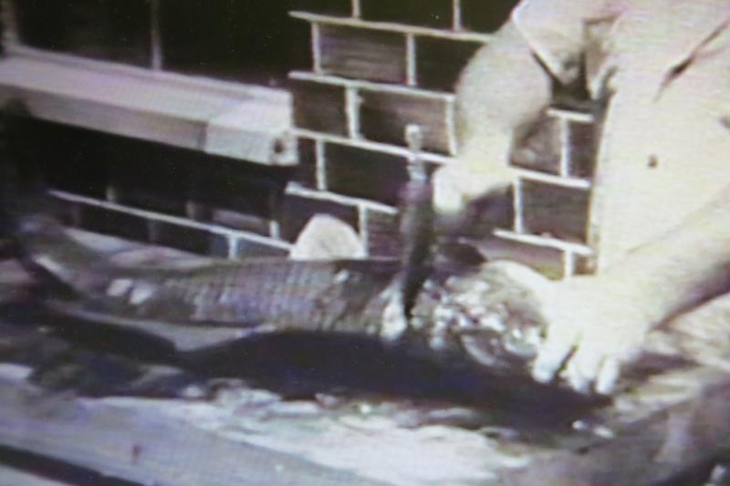 In a still-frame, the TV audience sees a giant carp filleted with a hatchet