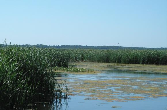 This land in southern Illinois was farmed for more than 80 years, but it's now being returned to its natural state.