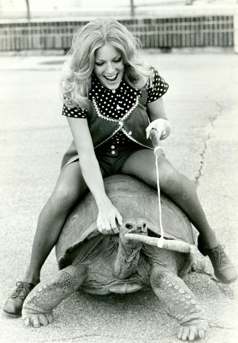 An unidentified woman hitches a ride on Barnaby, something no longer allowed