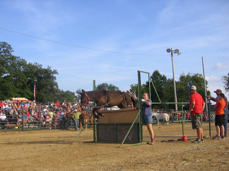 Competitor Becky Manees leads a mule at the East Perry Community Fair in Altenburg, Mo.