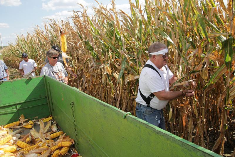 Contestants like Dick Humes have 20 minutes to pick as much corn as they can.