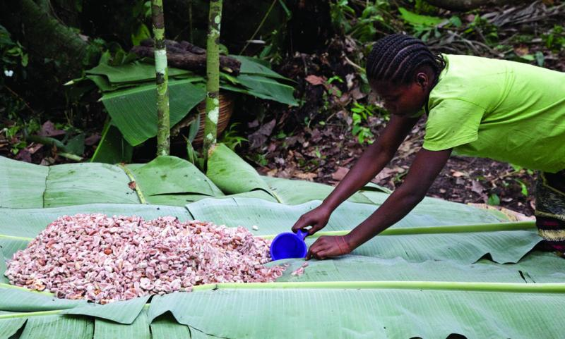 A woman drys cocoa beans in Liberia, 10/25/2010.