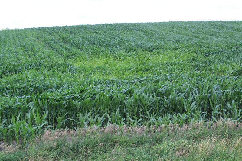 The Agricultural Resource Management Survey will soon poll about 300 Iowa corn growers on their use of chemical inputs.
