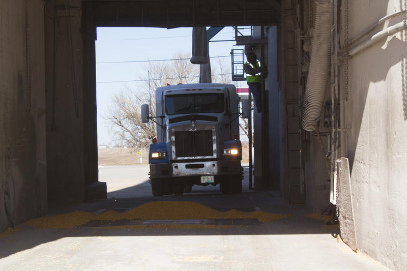 On a busy afternoon, a truck driver waits to pull his semi into this Heartland Coop elevator in Alleman.