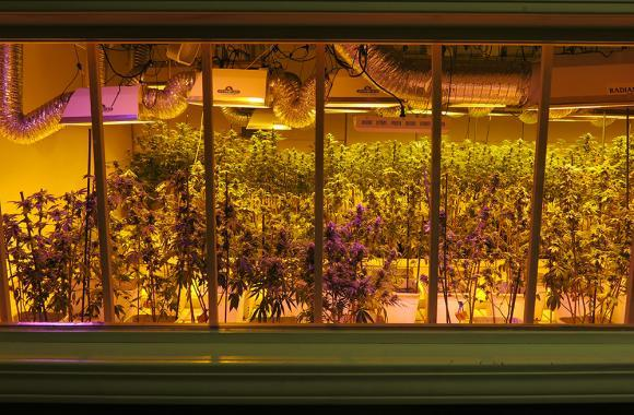In Colorado, laws require marijuana to be grown in indoor facilities, like this one in Denver.