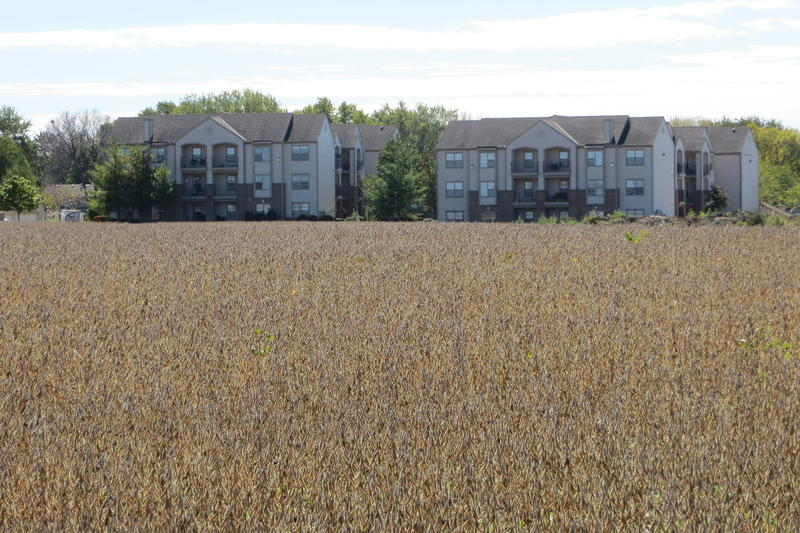 Endangered soybean field in Norwalk