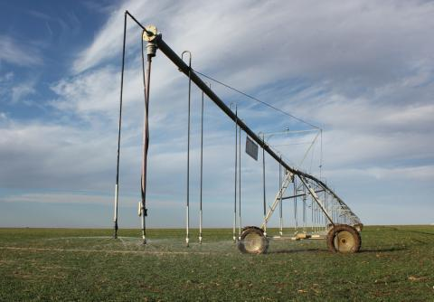 A center-pivot irrigation system waters a winter wheat field in southwest Kansas.