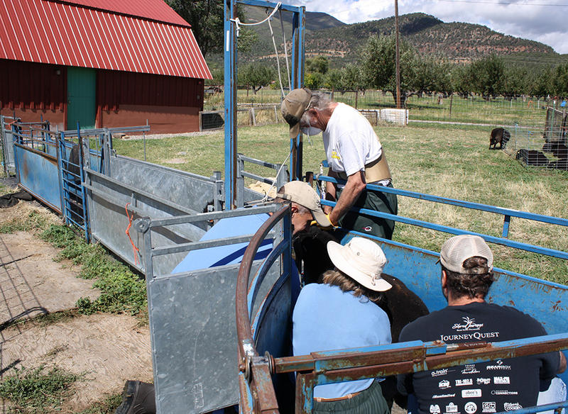 The McGuires and researchers from the USDA's National Animal Germplasm Program collect semen from a ram.