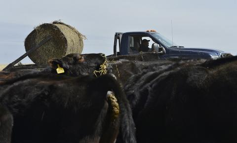 A recent proposal would increase the mandatory payment to $2-per-head of cattle.