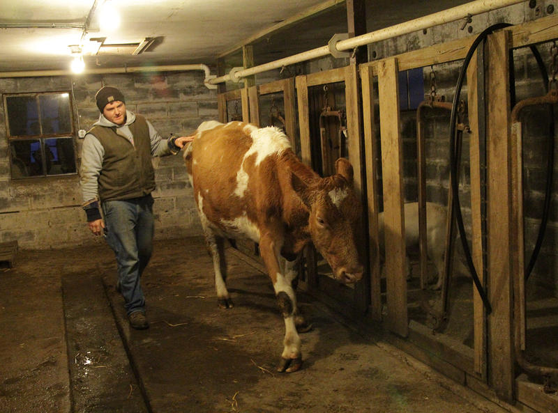 Dairyman Joe Zanger sells raw milk in Illinois, where growing demand for the product has caused public health officials to try and legalize it, in order to make it harder to buy.