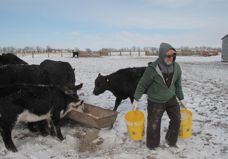 Gayland Regier carries buckets of feed to his cattle in southeast Nebraska. Imported cattle make up a small portion of the American beef supply, but many American farmers and ranchers are concerned that foreign-sourced meat could distort their markets.
