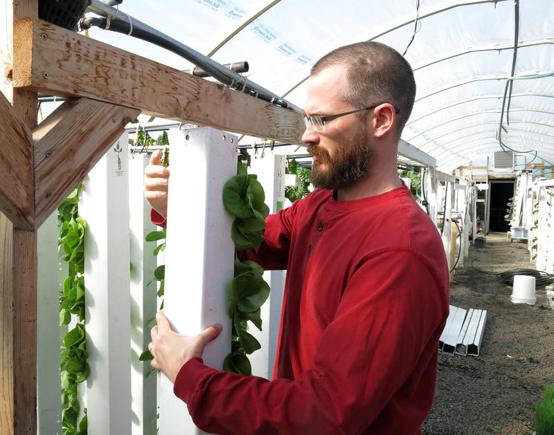 Nate Storey, CEO of Bright Agrotech, attaches a plastic growing tower inside the company's greenhouse in west Laramie, Wyo.