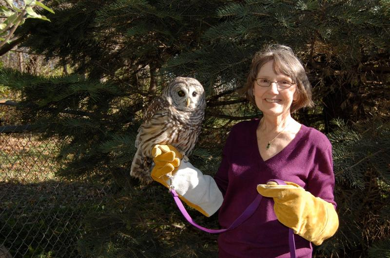 Linda Nebbe with an injured barred owl