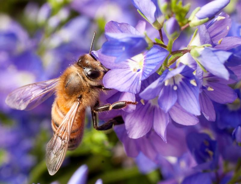 Hobbyists raising honeybees could get a tax break.