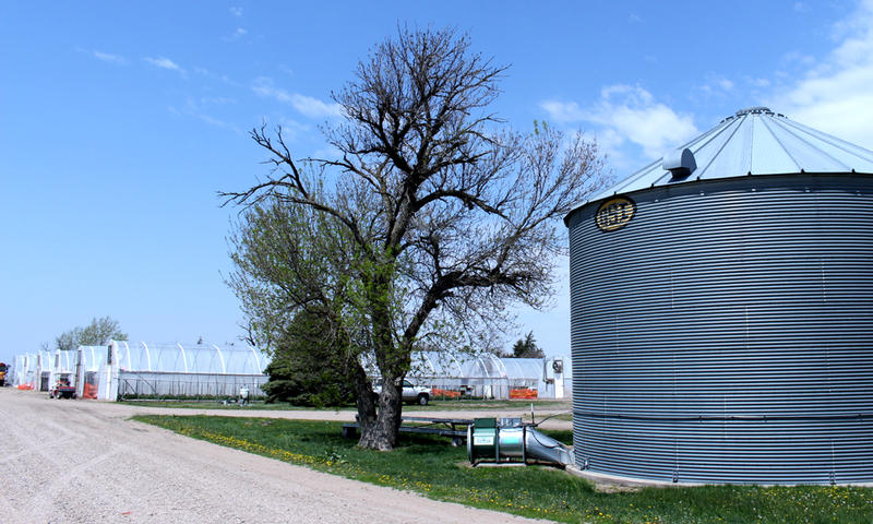 Grain bins stand at the Daniels' farm entrance, a relic of their farming past. Andy Daniels started transitioning from corn and soybeans to vegetables in the 1980s after a massive flood.