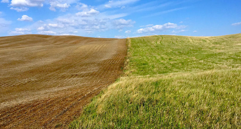 There are many factors behind the loss of grassland and native prairie in North Dakota, and the expansion of the Corn Belt is one of them. Here, a former grassland in Stutsman County, N.D., has been turned into cultivated fields.